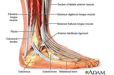 anklefootpic